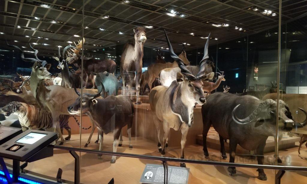 国立科学博物館の常設展