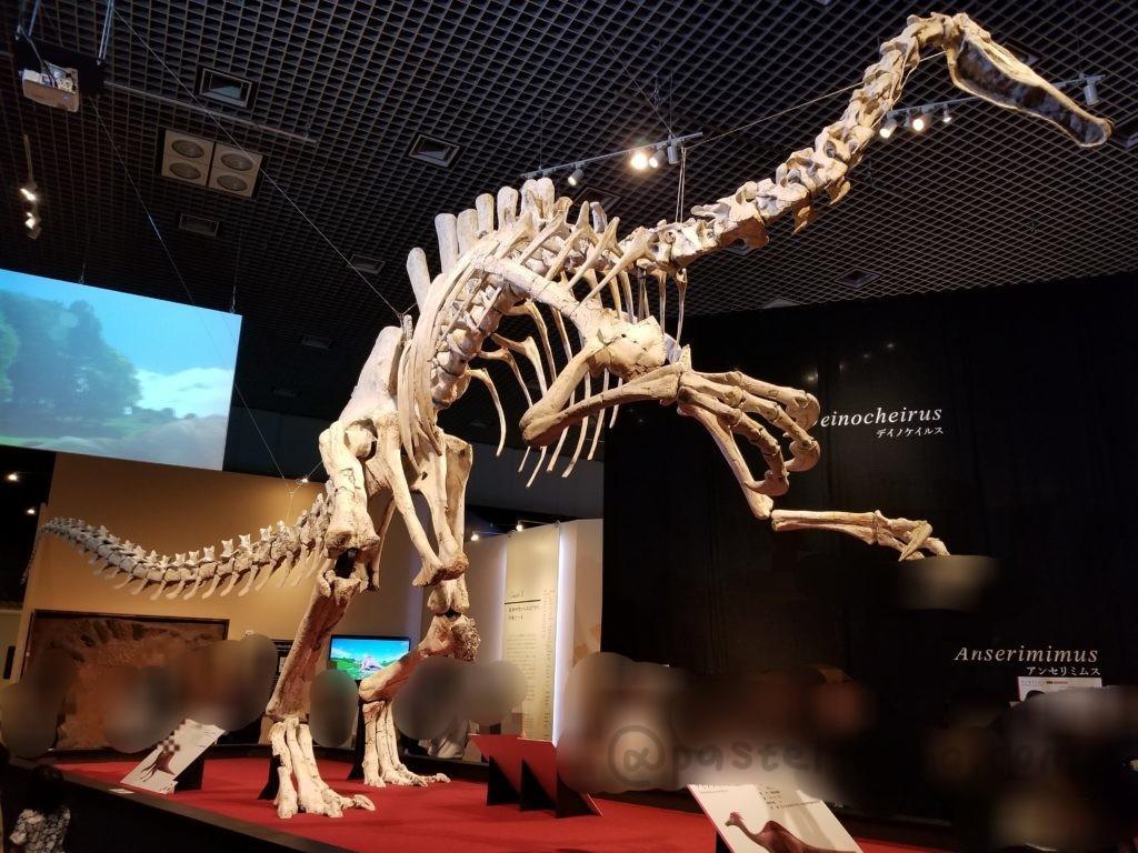 デイノケイルスの骨格標本