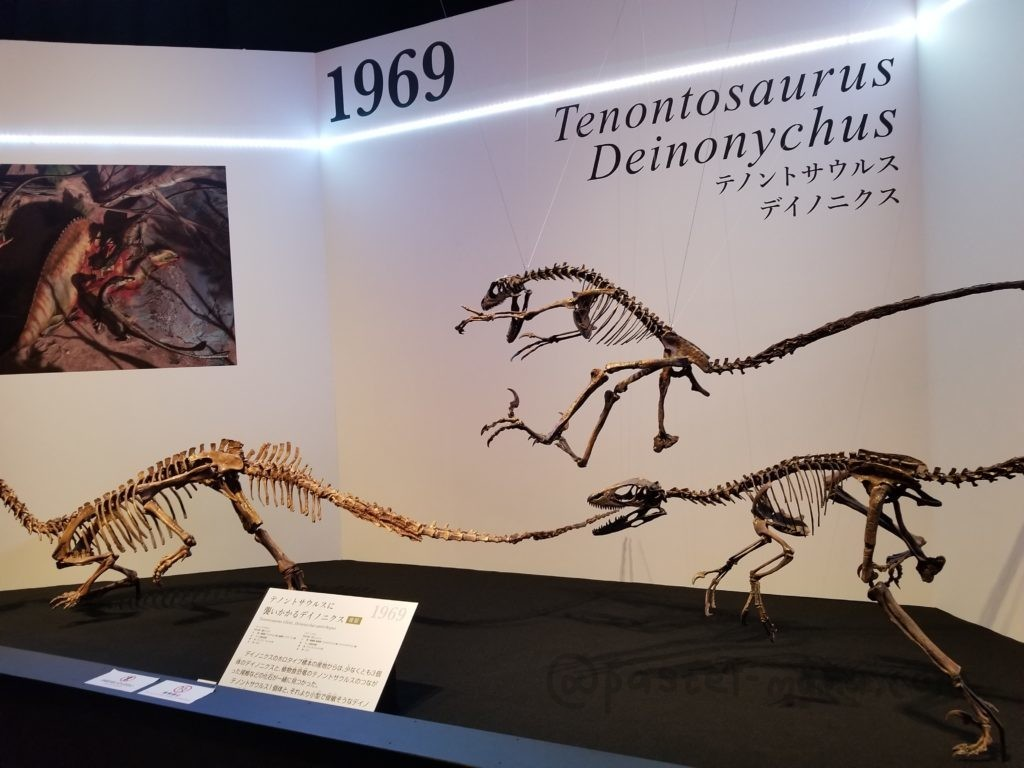 テノントサウルス、デイノニクス