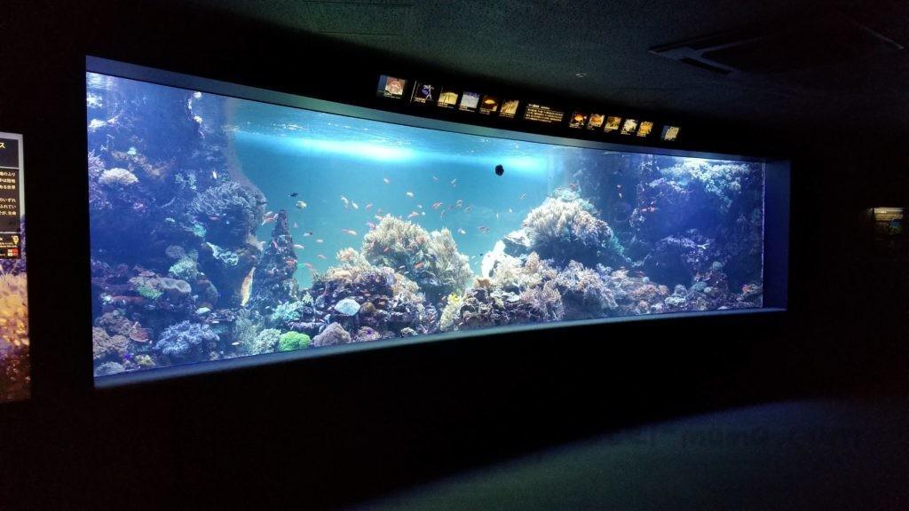 池袋サンシャイン水族館入って最初の大きな水槽