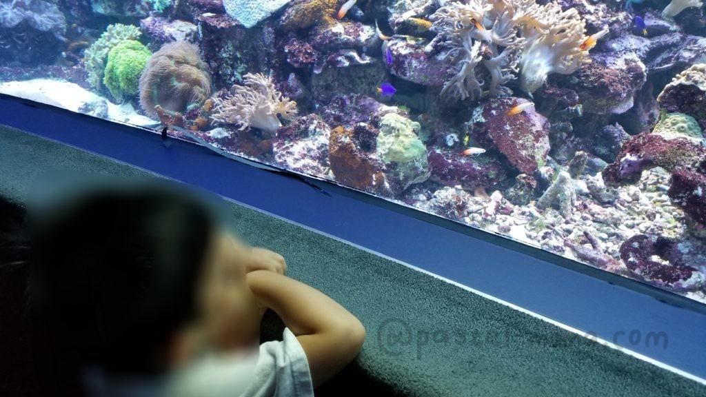 池袋サンシャイン水族館の低くて子供が見やすい水槽