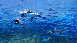 池袋サンシャイン水族館屋上のペンギン