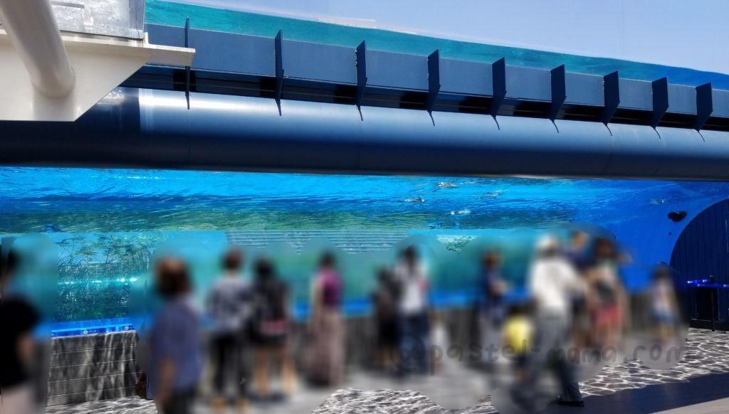 池袋サンシャイン水族館屋上のペンギン水槽