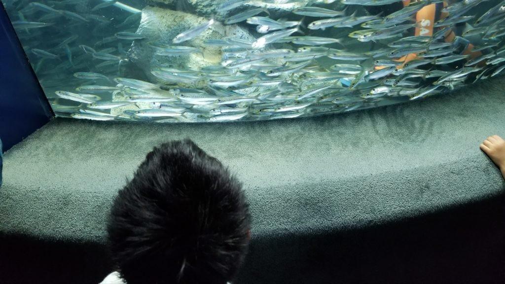 池袋サンシャイン水族館のイワシ水槽